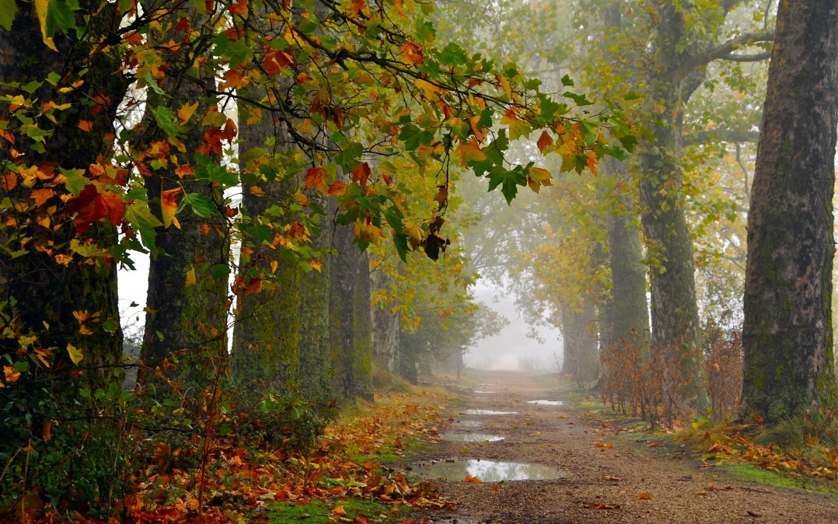 fall wallpaper 1680x1050 - photo #35