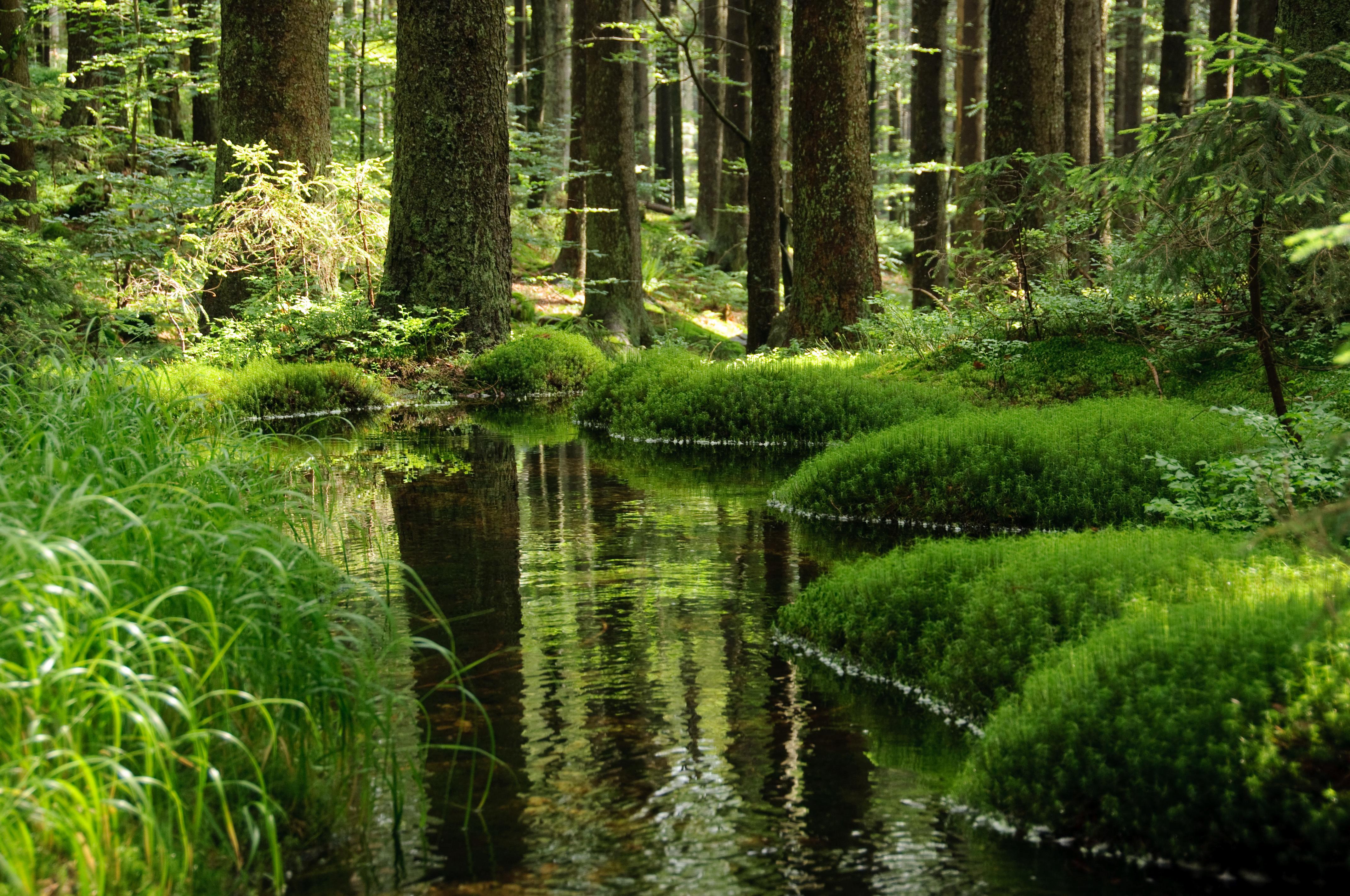 Сказочный лес картинка