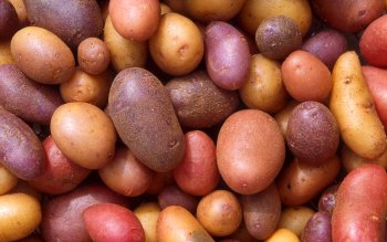 Food - Potato Wallpapers and Backgrounds ID : 382694