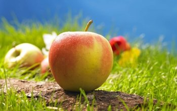 Food - Apple Wallpapers and Backgrounds ID : 383762