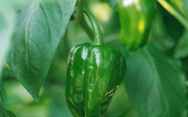 Food Pepper HD Wallpaper   Background Image