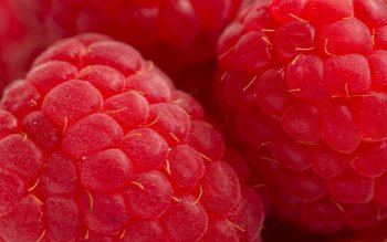 Alimento - Raspberry Wallpapers and Backgrounds ID : 385113