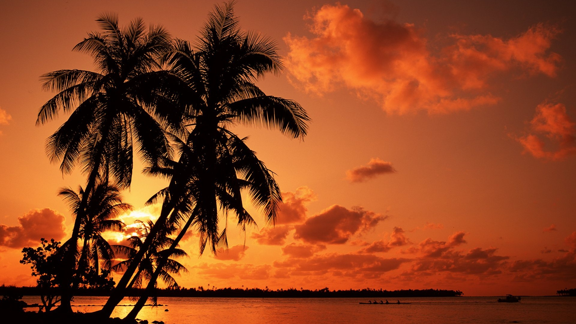 palm tree full hd wallpaper and background image | 1920x1080 | id:386252