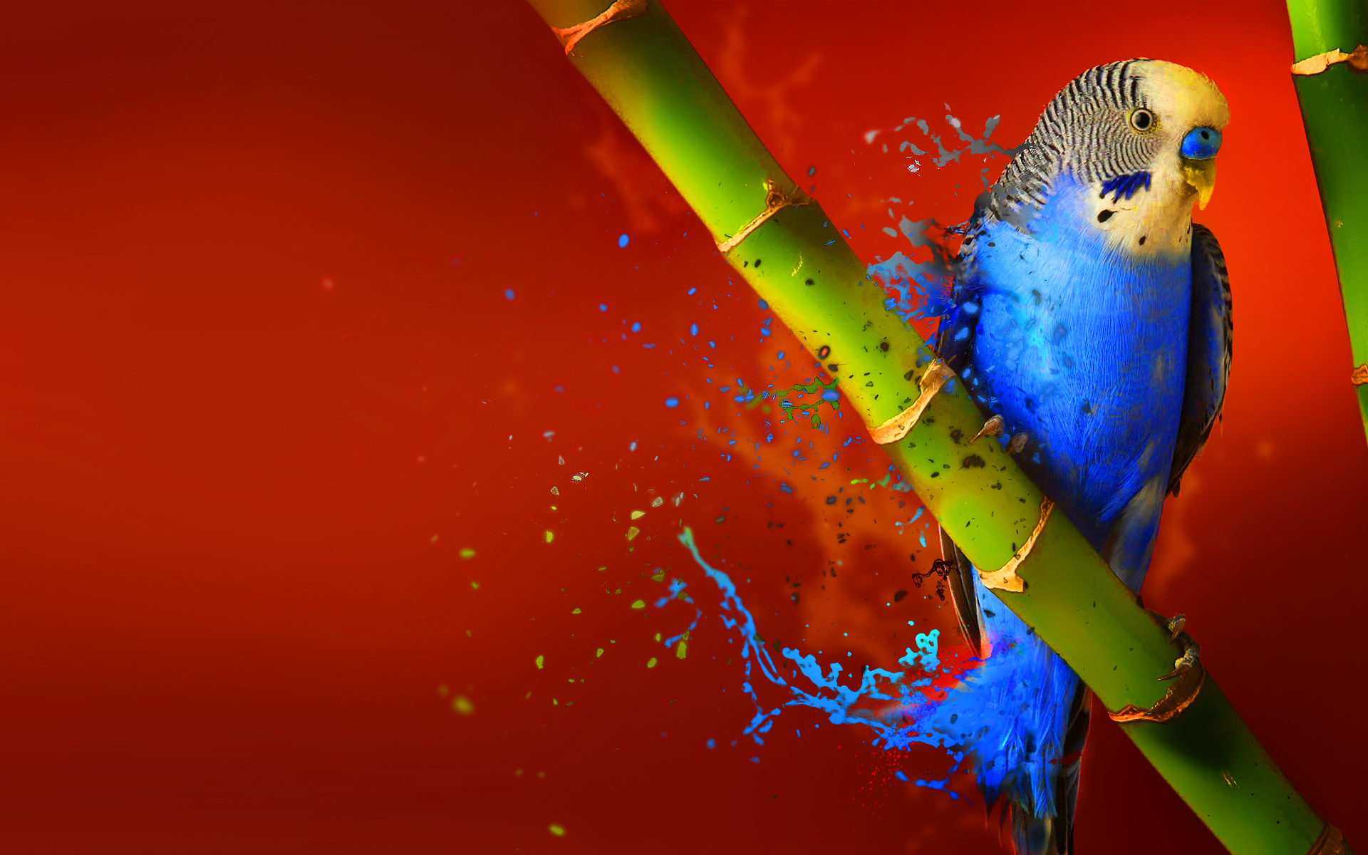 Budgerigar Full HD Wallpaper and Background | 1920x1200 ...