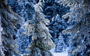 Earth - Winter Wallpapers and Backgrounds ID : 389296