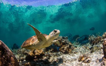 Animalia - Tortuga Wallpapers and Backgrounds ID : 390474