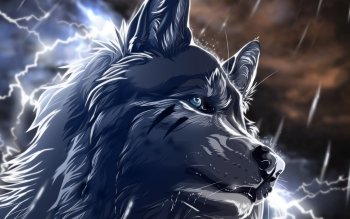 Animal - Wolf Wallpapers and Backgrounds ID : 390828