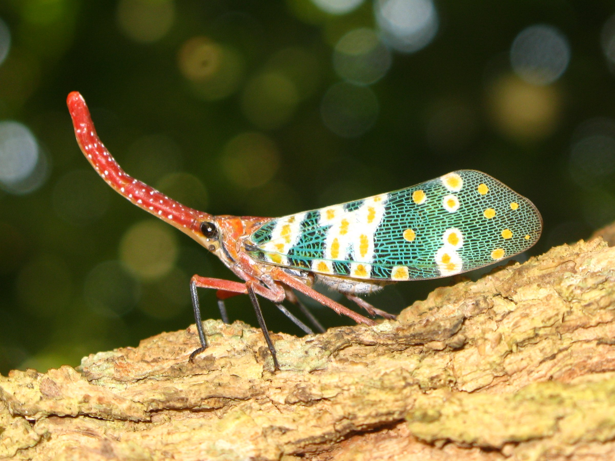 Lantern Fly HD Wallpaper | Background Image | 2400x1800 ...