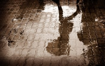 Fotografie - Raindrop Wallpapers and Backgrounds ID : 391261