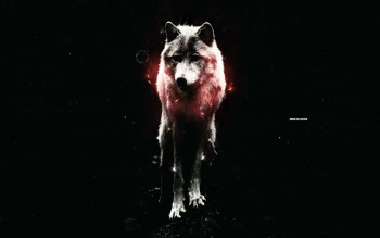 Djur - Wolf Wallpapers and Backgrounds ID : 394373