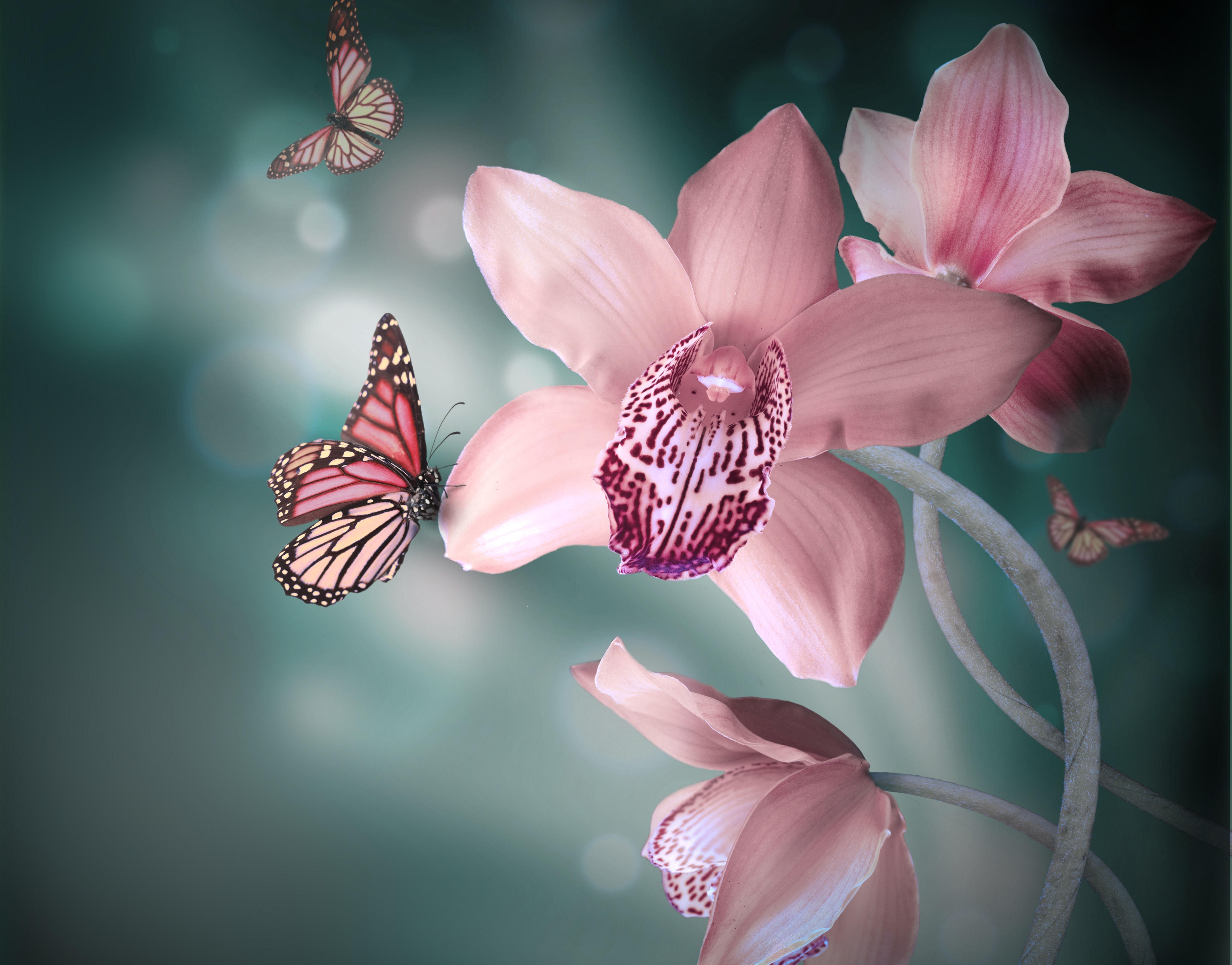 Wallpaper orchidee weiß  Orchidee 5k Retina Ultra HD Wallpaper and Hintergrund   7452x5834 ...
