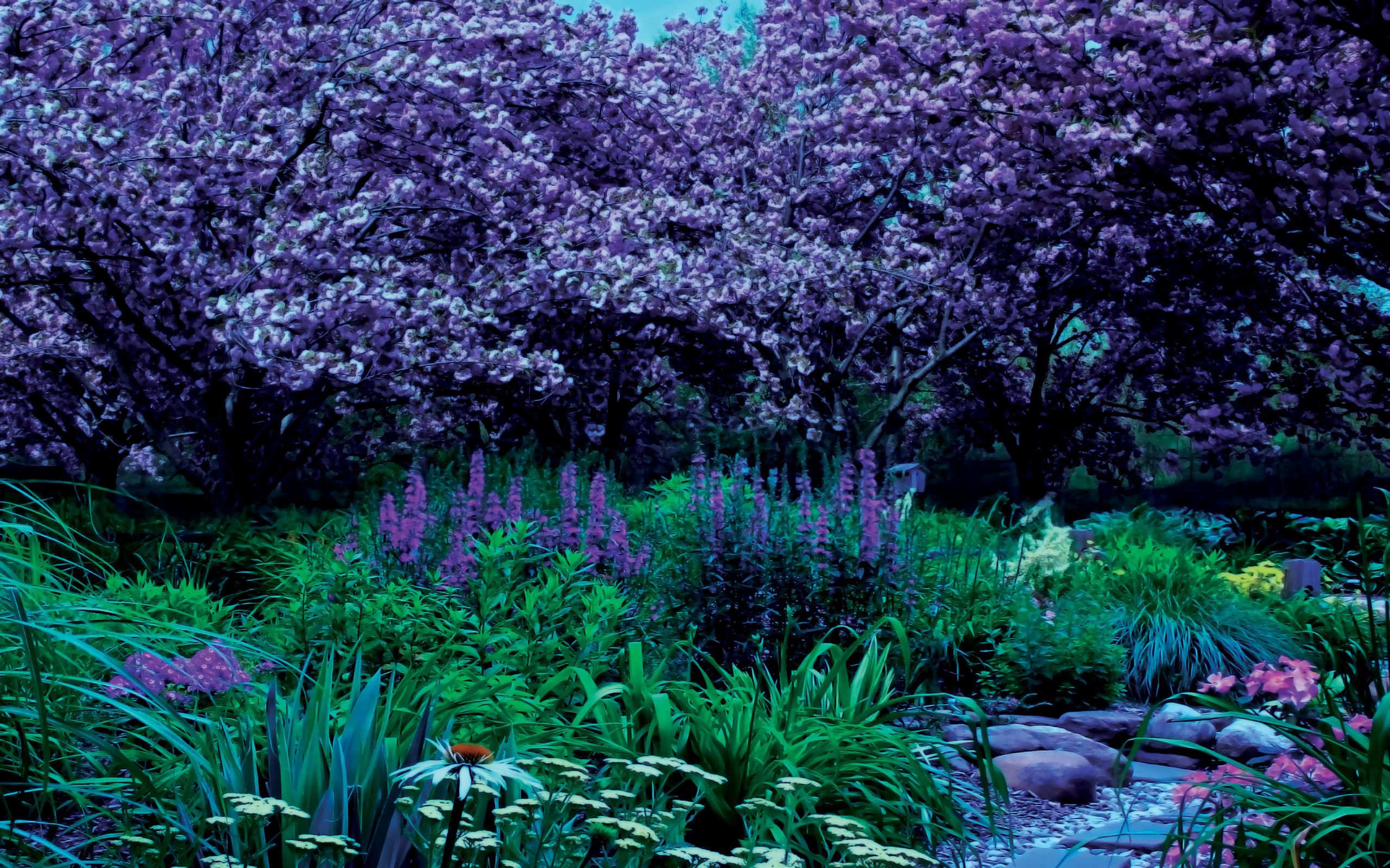 Jardin fonds d 39 cran arri res plan 2560x1600 id 396564 - Fond d ecran jardin anglais ...