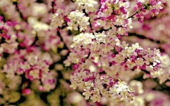 Earth - Blossom Wallpapers and Backgrounds ID : 397888