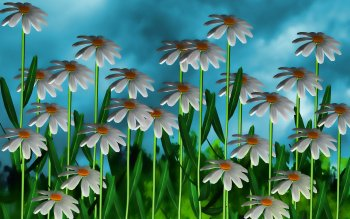 CGI - Flower Wallpapers and Backgrounds ID : 397977