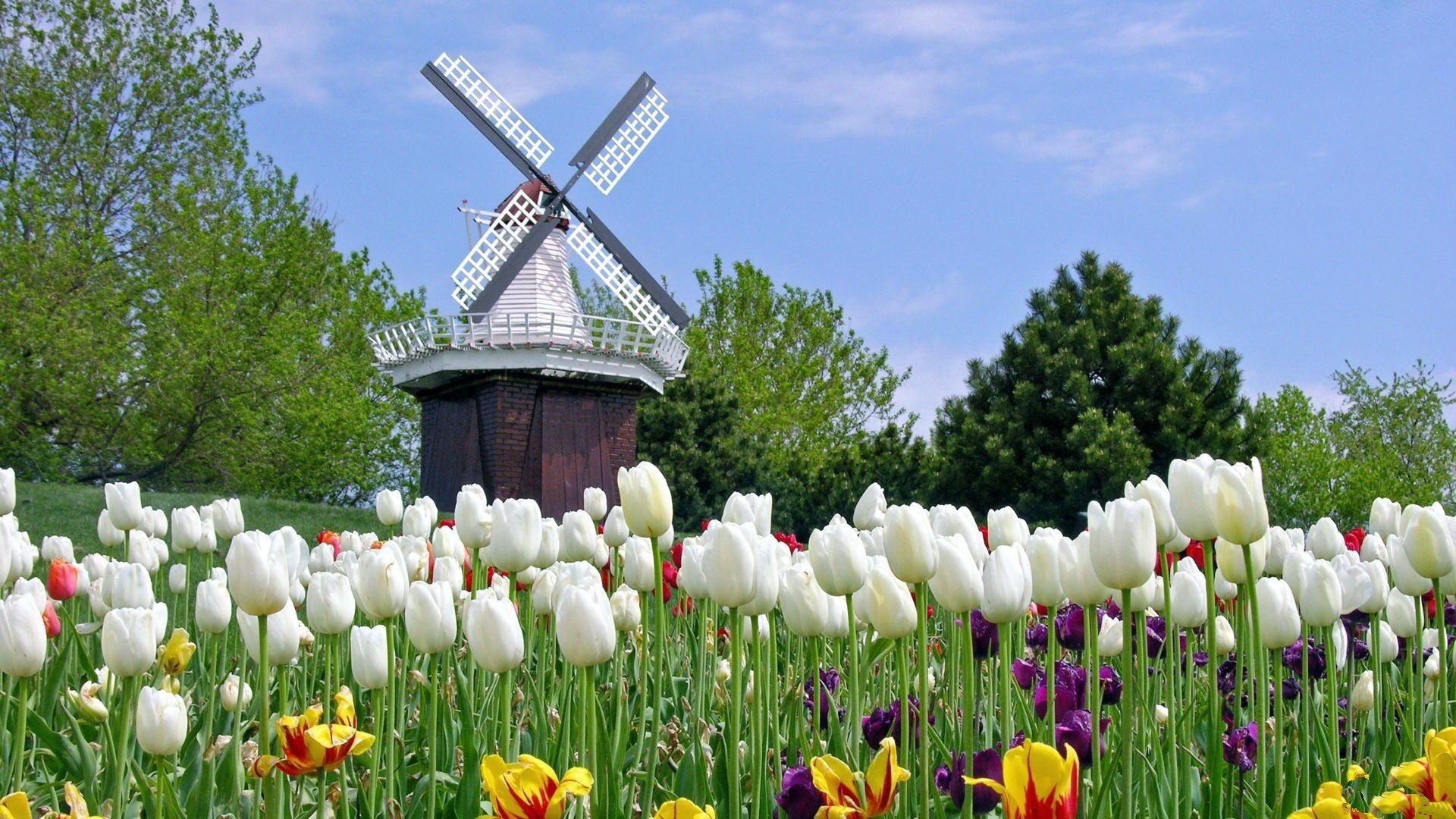 Windmill HD Wallpapers Backgrounds Wallpaper