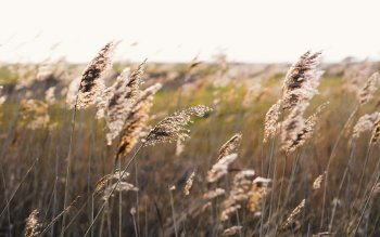 Earth - Grass Wallpapers and Backgrounds ID : 399064