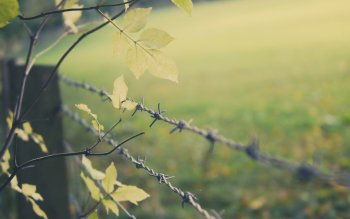 Barbed Wire Wallpaper