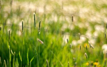 Earth - Grass Wallpapers and Backgrounds ID : 401707
