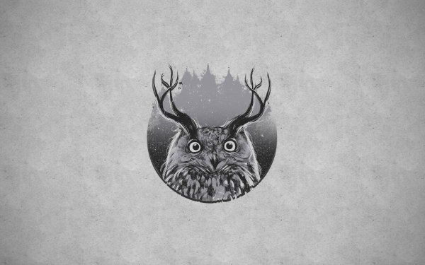 Animal - owl Wallpapers and Backgrounds