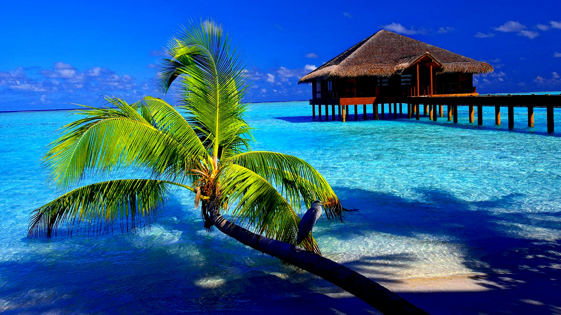 tropical vacation location
