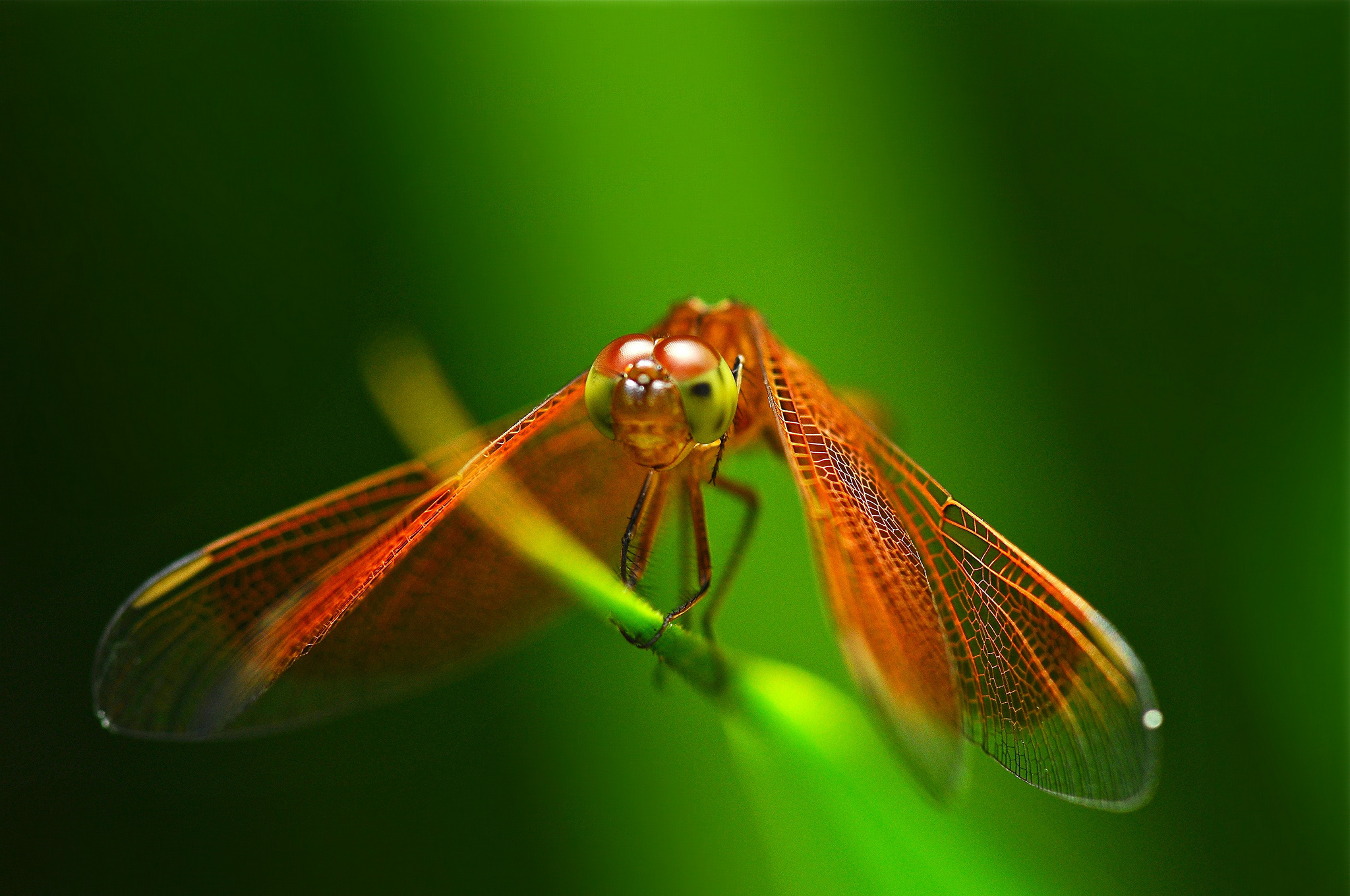 dragonfly wallpaper iphone 6