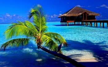 Fotografía - Tropical Wallpapers and Backgrounds ID : 402163