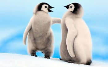 Animal - Penguin Wallpapers and Backgrounds ID : 404045