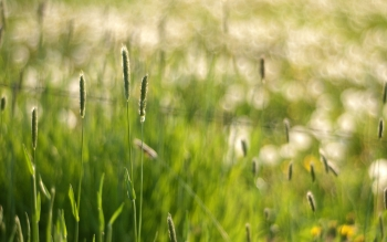 Earth - Grass Wallpapers and Backgrounds ID : 406880