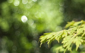 Earth - Leaf Wallpapers and Backgrounds ID : 406881
