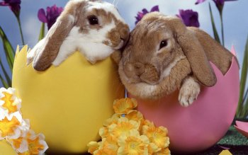 Animal - Rabbit Wallpapers and Backgrounds ID : 407137