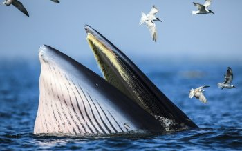 Animal - Whale Wallpapers and Backgrounds ID : 409591