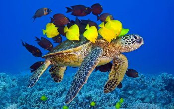Animal - Turtle Wallpapers and Backgrounds ID : 409780