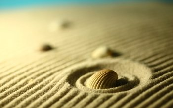 Earth - Shell Wallpapers and Backgrounds ID : 411188