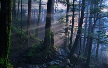 Earth - Forest Wallpapers and Backgrounds ID : 411498