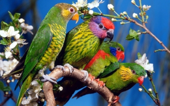 Animalia - Parrot Wallpapers and Backgrounds ID : 411536