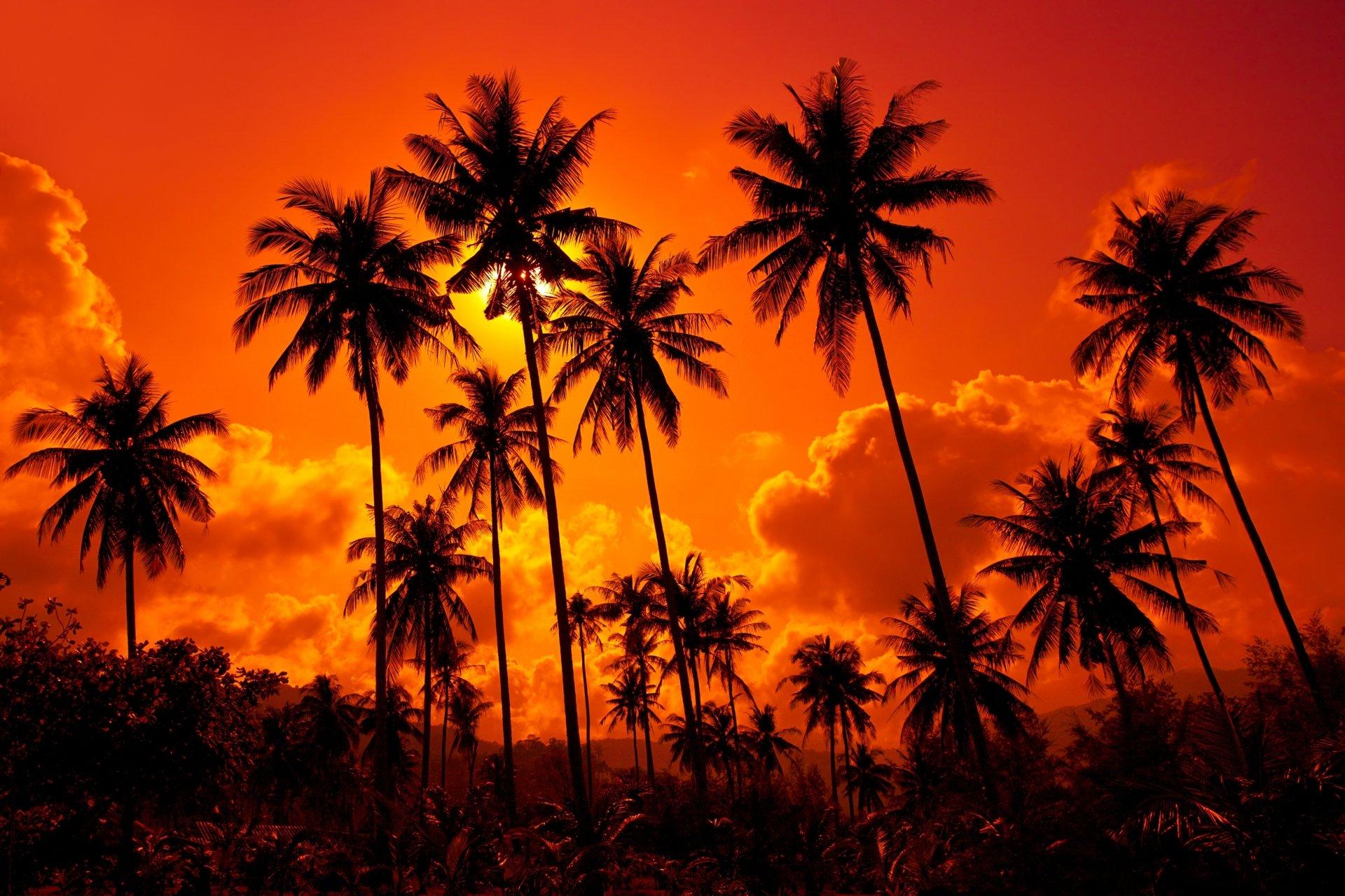 Sunset Over Beach Of Palm Trees Hd Wallpaper: Palmera 4k Ultra HD Fondo De Pantalla And Fondo De