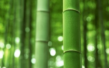 Tierra - Bamboo Wallpapers and Backgrounds ID : 413336