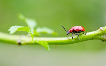 Animal - Beetle Wallpapers and Backgrounds ID : 414132