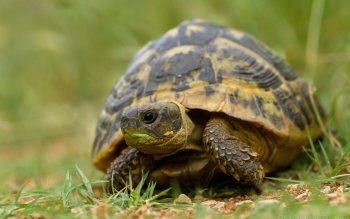 Animal - Turtle Wallpapers and Backgrounds ID : 414233