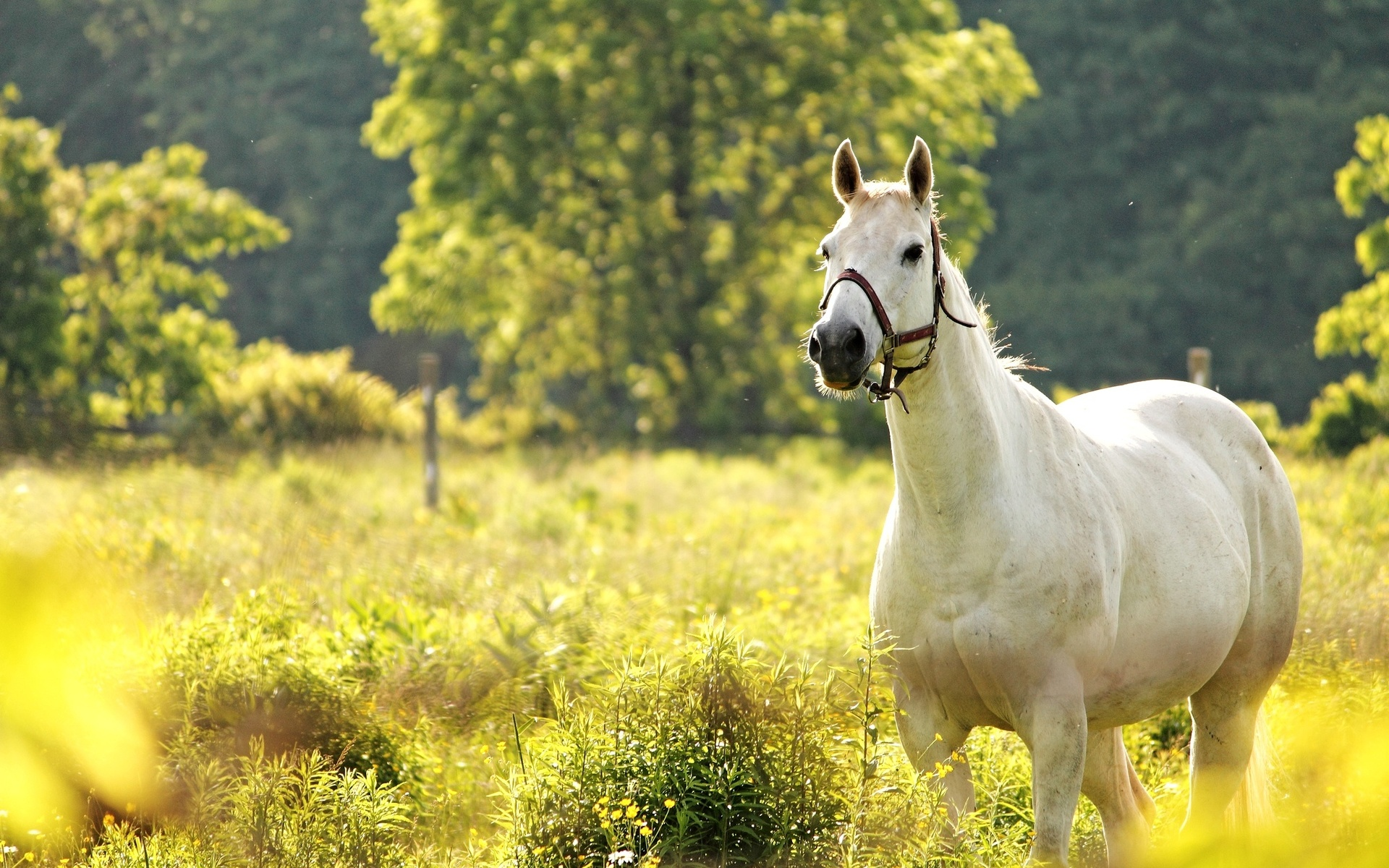 Horse Full HD Wallpaper and Background 1920x1200 ID415221