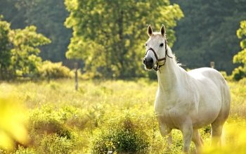 Animal - Horse Wallpapers and Backgrounds ID : 415221