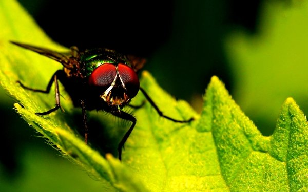 Animal Fly HD Wallpaper | Background Image