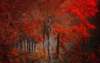 Earth - Autumn Wallpapers and Backgrounds ID : 417462