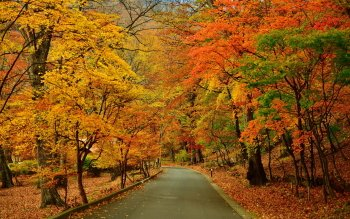 Photography - Autumn Wallpapers and Backgrounds ID : 417751