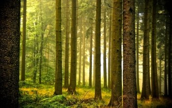 Earth - Forest Wallpapers and Backgrounds ID : 417939
