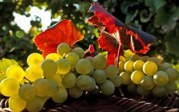 Alimento - Grapes Wallpapers and Backgrounds ID : 417974