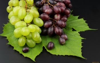 Alimento - Grapes Wallpapers and Backgrounds ID : 417976