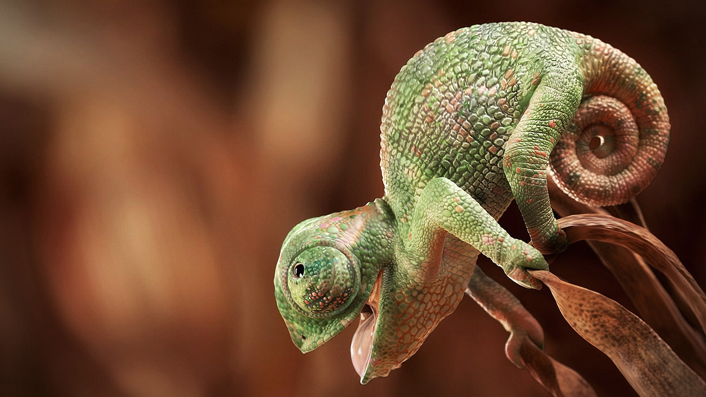 chameleon wallpaper and background 1440x810 id 418470