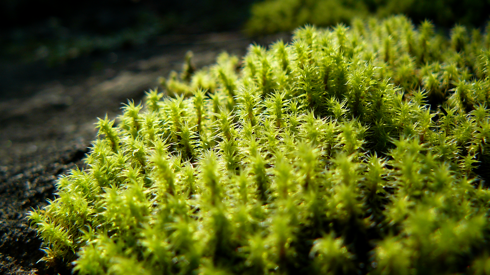 moss Computer Wallpapers, Desktop Backgrounds | 1920x1080 ...