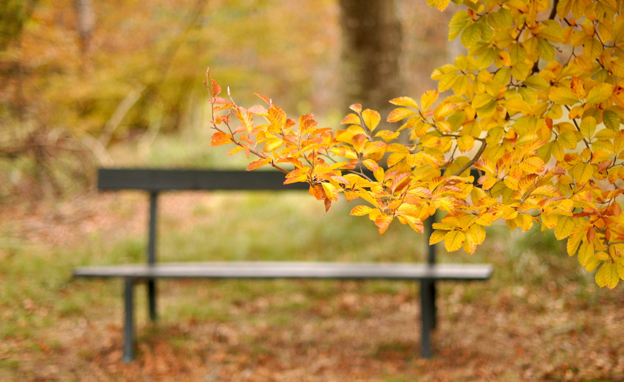 Bench Hd Wallpaper Background Image 2048x1253 Id419951